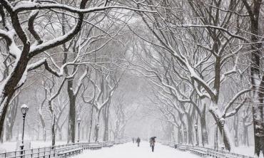 A faithful lover of snow