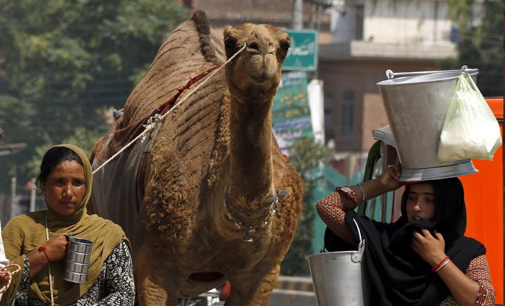The nomadic life