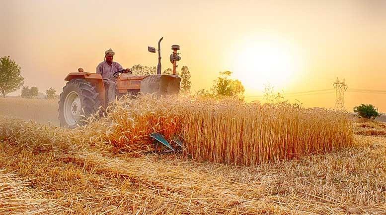 Wheat forecast