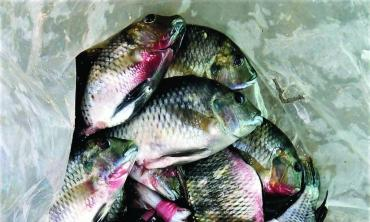 The alarming case of the dead fish