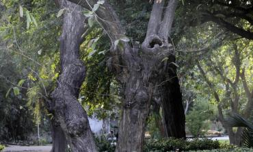 The threat from trees
