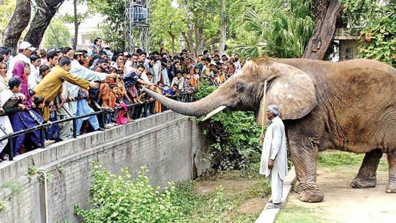 A zoo-keeper's lament
