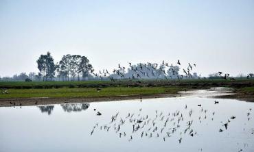 Wetlands matter