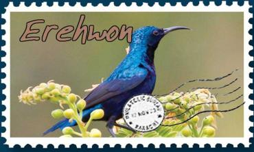 Purple sunbirds