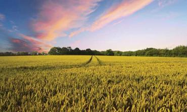 Nature heals itself while we quarantine