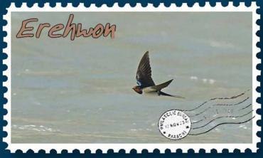 Swallows in Gilgit