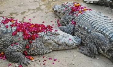 The crocodiles of Manghopir