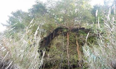 The hanging gardens of Kanhatti
