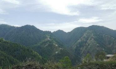Imbibing nature at Nathiagali