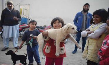 Dogs in urban  settlements