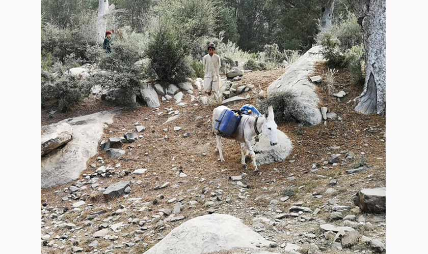 Bringing water for the lodge on mule.