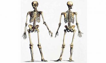 Of skull and bones