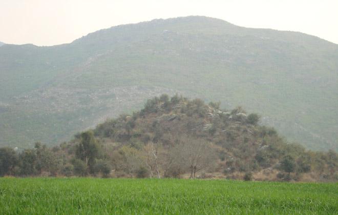 The green fields in Khanpur.
