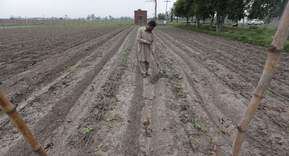 The switching over from flood irrigation to drip irrigation is tipped to help ensure an increased agri-production and stop water pilferage and the fields from becoming barren.
