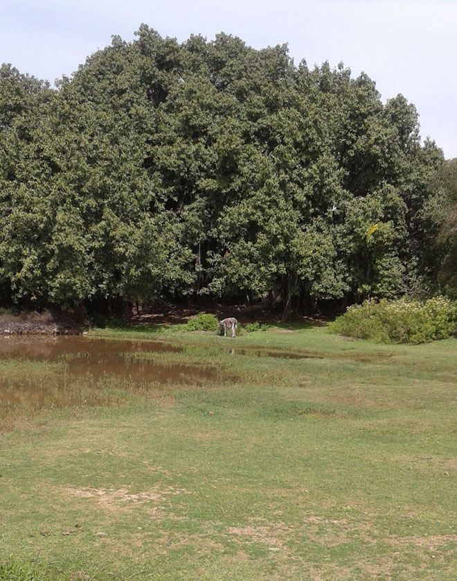 The massive banyan complex.