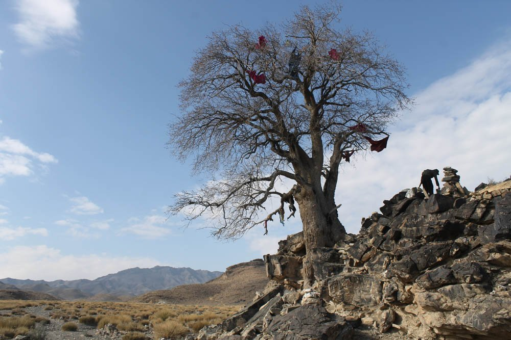 The revered lonely tree in Chinu Khwa.