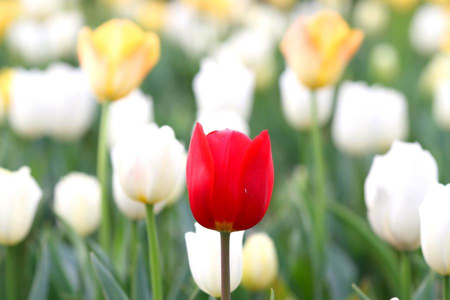 The opulent flower.