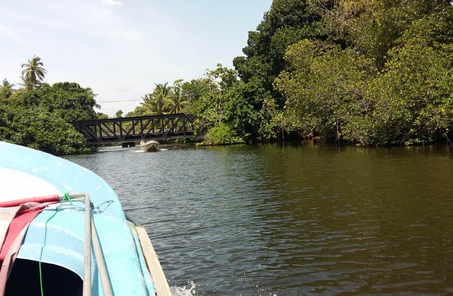 Boatride throuugh the mangrove forset.