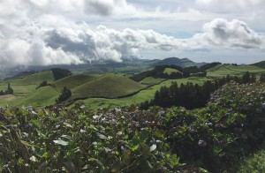 Gorreana, the oldest and last remaining tea plantation in Europe.