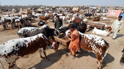 Karachiites spent Rs30 billion on Eid sacrifice