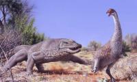 Humans implicated in huge Australian bird's demise