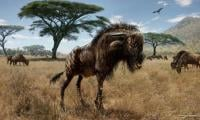 Ancient wildebeest cousin boasted bizarre dinosaur-like trait