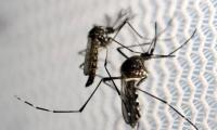 China confirms first case of Zika virus: Xinhua