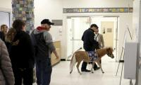 For New York hospital's patients, miniature horses are a strong Rx