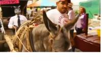Donkeys honored in Mexican town with their own special day