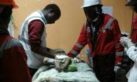 Baby girl pulled out alive 3 days after Kenya building collapse - Red Cross