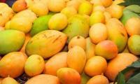 Mangoes arrive in capital