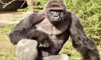 Outrage mounts over gorilla killing in boy's rescue