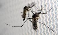 Olympics will come and go but Zika is here to stay, scientists say