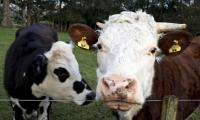 Investors urge food companies to shift from meat to plants