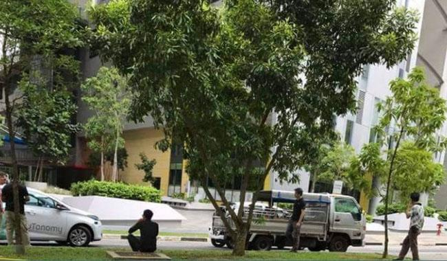 Driverless taxi hits lorry in Singapore trial