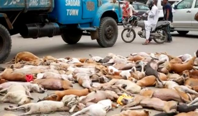Thousand dogs poisoned to death in Karachi