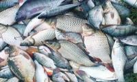 Fish exports increase 14 per cent in four months
