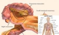 Scientists discover new organ inside human body