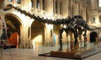 London museum bids farewell to Dippy the dinosaur