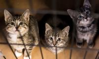 Hundreds of cats quarantined in New York City bird flu outbreak