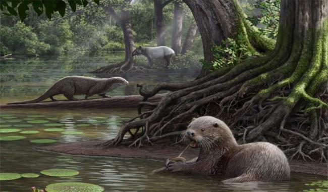Fossils of utterly huge otter unearthed in China
