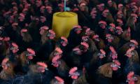 China bird flu deaths surge in what could be the worst season ever