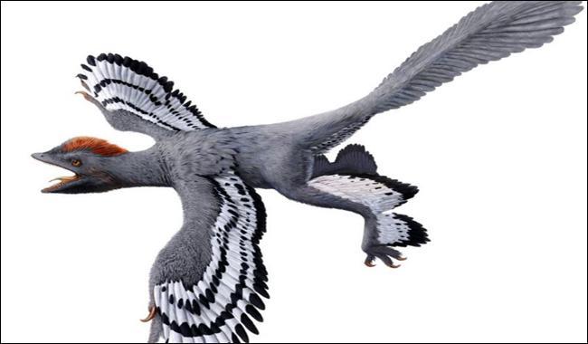 Laser technique sheds light on dinosaur fossils