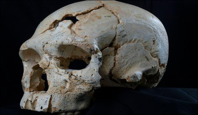 400,000 yr-old half-skull points to mystery people