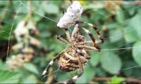 Science unravels spiders´ monstrous food web