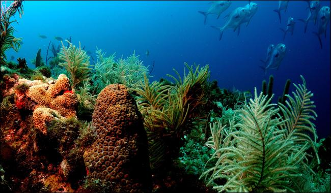 ´Dead zones´ a threat to coral reefs