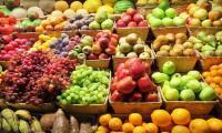 Fruit fuelled evolution of a bigger brain: study