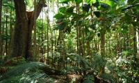 First world survey finds 9,600 tree species risk extinction