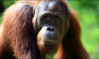 Great apes know when people are wrong: study