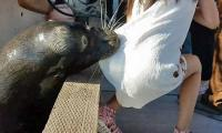 Sea lion in Canada pulls girl into water, video goes viral
